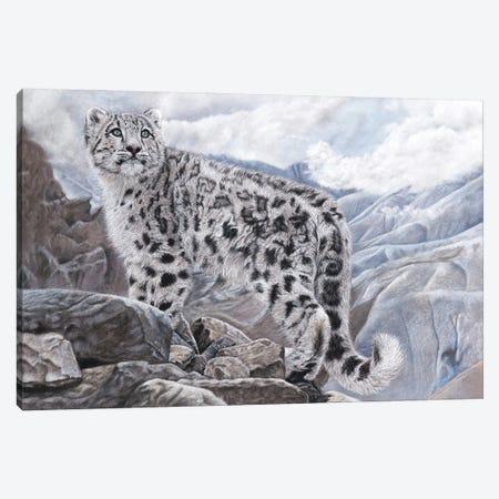 Snow Leopard Canvas Print #MIV77} by Mikhail Vedernikov Canvas Artwork