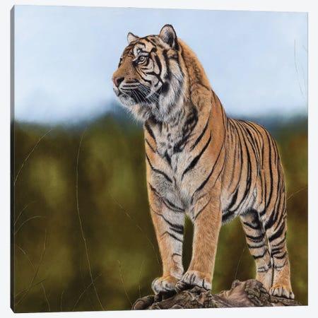 Tiger Canvas Print #MIV82} by Mikhail Vedernikov Canvas Art