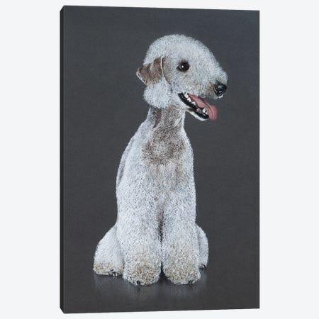 Bedlington Terrier Canvas Print #MIV8} by Mikhail Vedernikov Canvas Art