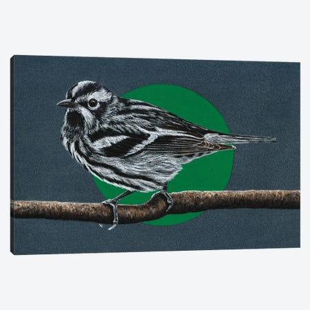 Black-And-White Warbler Canvas Print #MIV9} by Mikhail Vedernikov Canvas Artwork