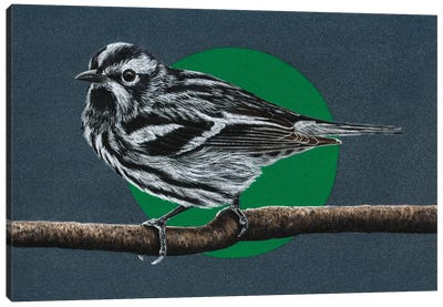 Black-And-White Warbler Canvas Art Print
