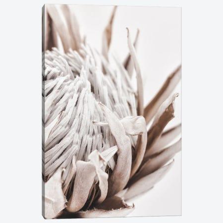 Autumn Protea Canvas Print #MIZ111} by Magda Izzard Canvas Art Print