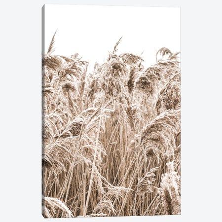 Golden Grass II Canvas Print #MIZ133} by Magda Izzard Canvas Art Print