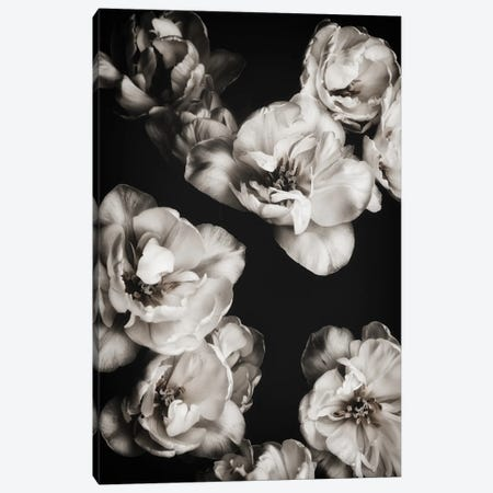 White Tulips I Canvas Print #MIZ149} by Magda Izzard Canvas Artwork