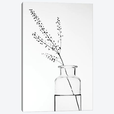 Bottle With Branches II Canvas Print #MIZ14} by Magda Izzard Canvas Wall Art