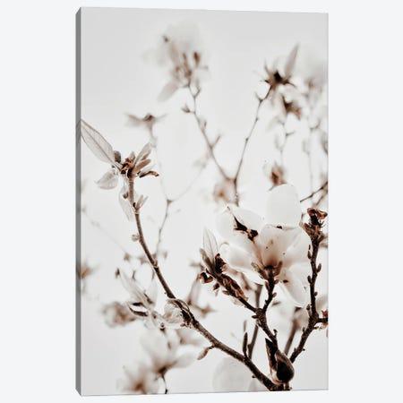 White Magnolia I Canvas Print #MIZ152} by Magda Izzard Art Print