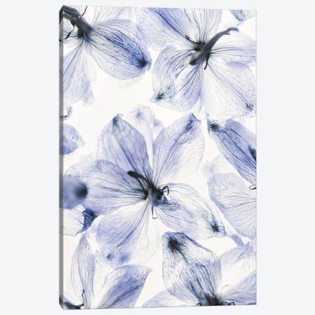 Summer Flowers I Canvas Print #MIZ172} by Magda Izzard Canvas Print