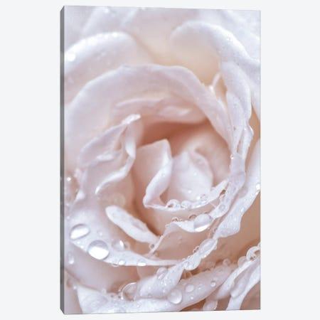 Soft Rose Canvas Print #MIZ181} by Magda Izzard Canvas Art