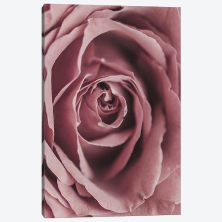 Powder Rose Canvas Print #MIZ208} by Magda Izzard Canvas Print