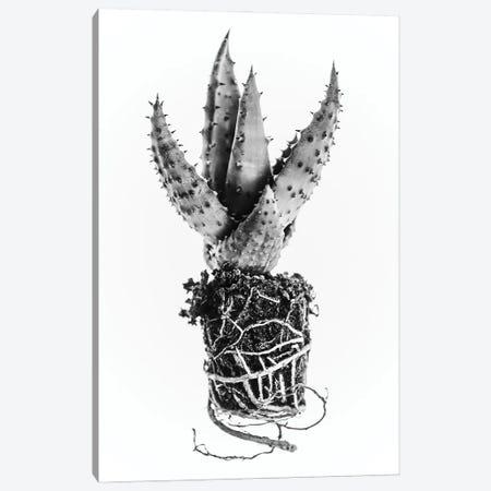 Cactus Canvas Print #MIZ21} by Magda Izzard Canvas Wall Art