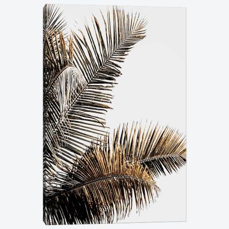 California Palm Canvas Print #MIZ24} by Magda Izzard Canvas Print