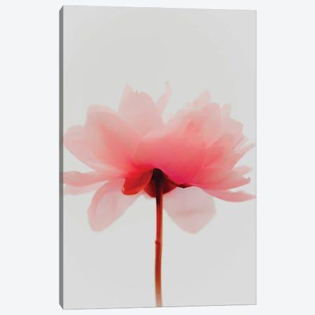 Neon Peony Canvas Print #MIZ56} by Magda Izzard Canvas Art