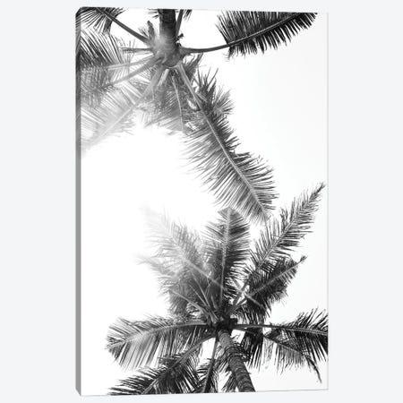 Palm Trees Of Bali Canvas Print #MIZ59} by Magda Izzard Canvas Art Print