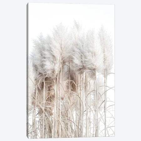 Pampas Grass I Canvas Print #MIZ60} by Magda Izzard Canvas Wall Art