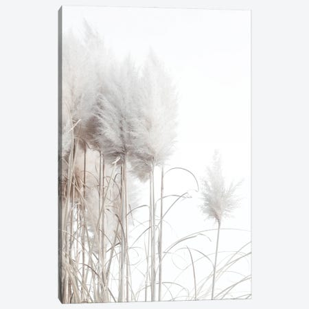 Pampas Grass II Canvas Print #MIZ61} by Magda Izzard Canvas Artwork
