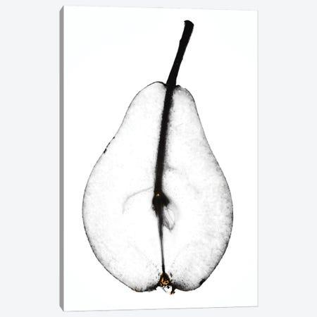 Pear Canvas Print #MIZ67} by Magda Izzard Canvas Art Print