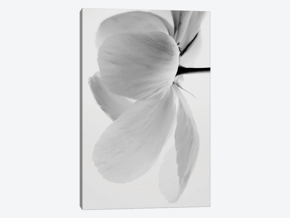 White Beauty by Magda Izzard 1-piece Canvas Artwork