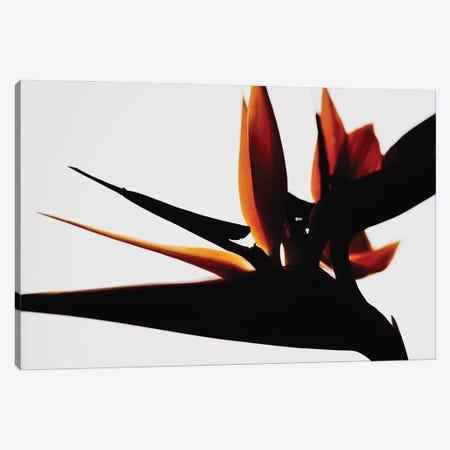Bird Of Paradise III Canvas Print #MIZ8} by Magda Izzard Canvas Art