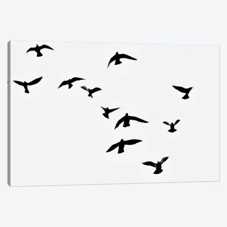 Birds Canvas Print #MIZ9} by Magda Izzard Canvas Artwork
