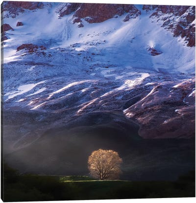 Golden Light And The Tree Alone Canvas Art Print