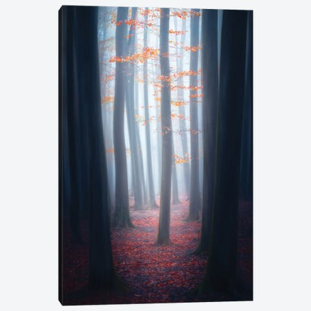 Raash Jungle Canvas Print #MJB2} by Majid Behzad Canvas Art