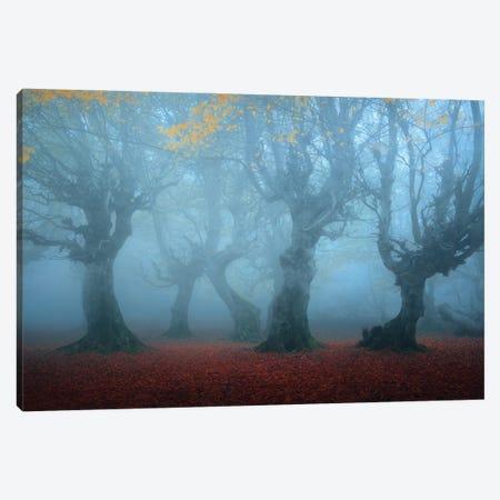 Posing In The Mist Canvas Print #MJB4} by Majid Behzad Canvas Art Print