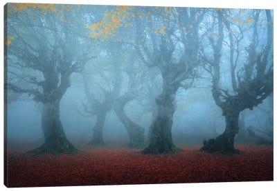 Posing In The Mist Canvas Art Print