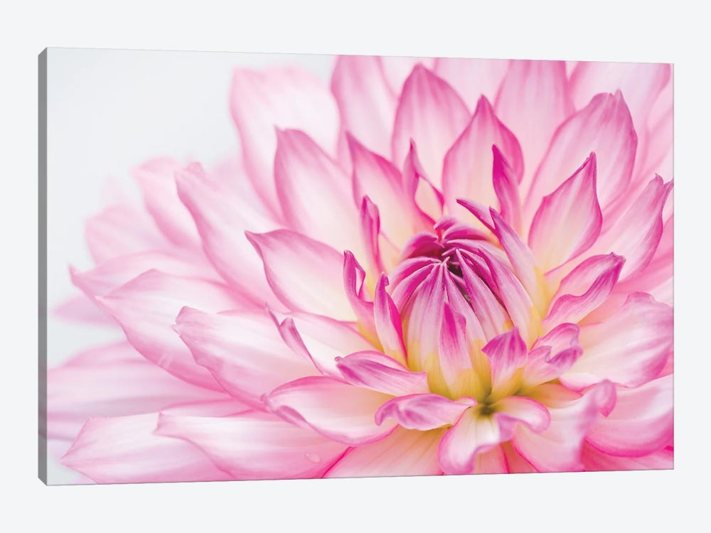 Dahlia by Alan Majchrowicz 1-piece Canvas Art
