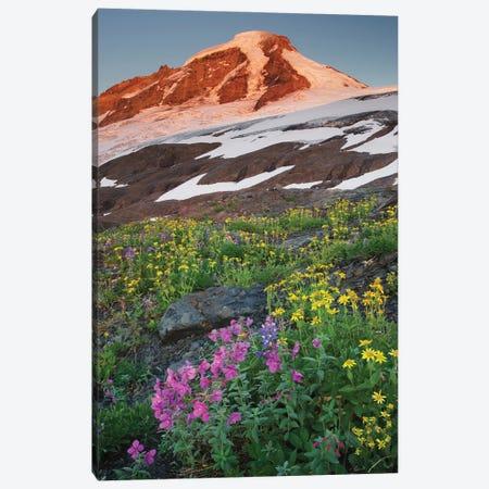USA, Washington State. Mount Baker, seen from meadows of Heliotrope Ridge, Mount Baker Wilderness. Canvas Print #MJC108} by Alan Majchrowicz Canvas Print