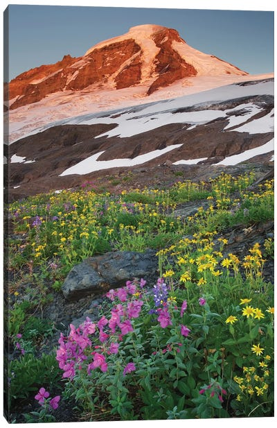 USA, Washington State. Mount Baker, seen from meadows of Heliotrope Ridge, Mount Baker Wilderness. Canvas Art Print