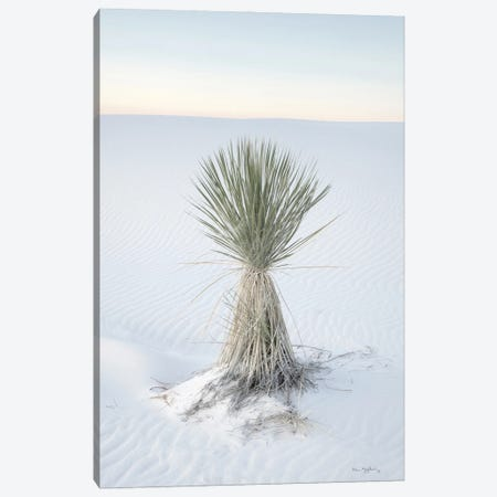 Yucca In White Sands National Monument Canvas Print #MJC115} by Alan Majchrowicz Canvas Print