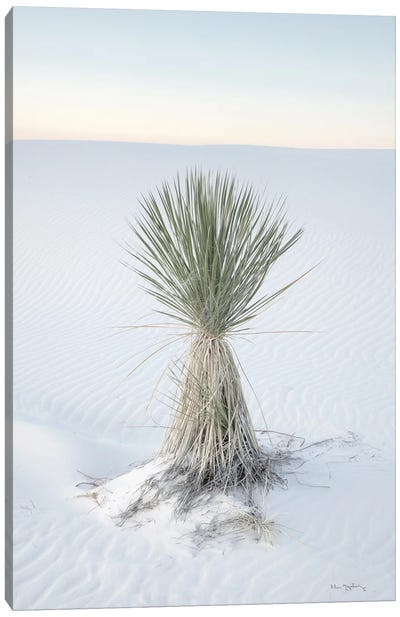 Yucca In White Sands National Monument Canvas Art Print