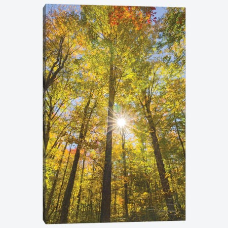 Autumn Foliage Sunburst III Canvas Print #MJC26} by Alan Majchrowicz Canvas Art