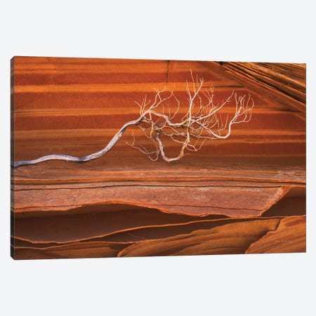 Coyote Buttes III Canvas Print #MJC34} by Alan Majchrowicz Canvas Print