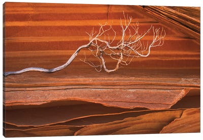Coyote Buttes III Canvas Art Print