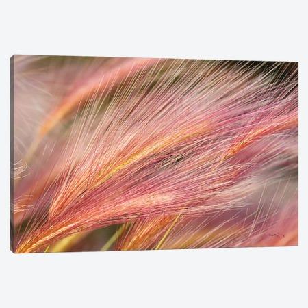 Foxtail Barley III 3-Piece Canvas #MJC41} by Alan Majchrowicz Canvas Print