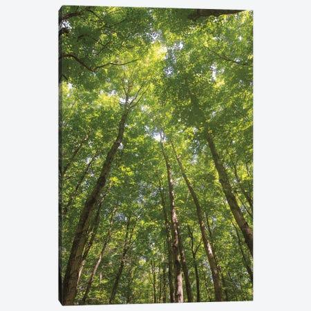 Hardwood Forest Canopy II Canvas Print #MJC45} by Alan Majchrowicz Canvas Wall Art