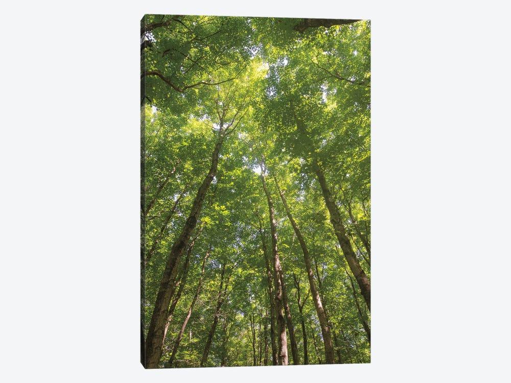 Hardwood Forest Canopy II by Alan Majchrowicz 1-piece Canvas Art Print
