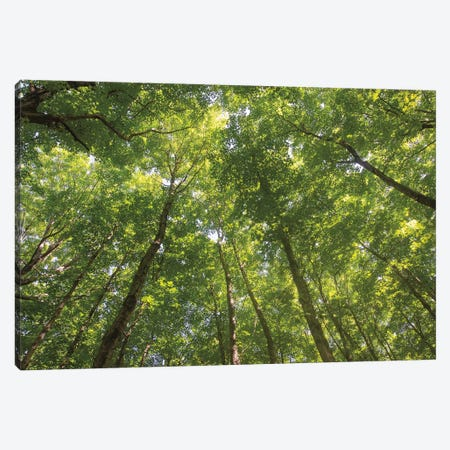Hardwood Forest Canopy IV Canvas Print #MJC47} by Alan Majchrowicz Canvas Artwork