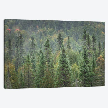 Superior National Forest I Canvas Print #MJC50} by Alan Majchrowicz Canvas Art