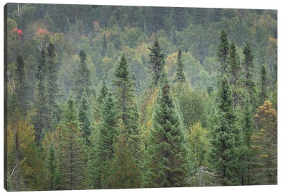 Superior National Forest I Canvas Art Print