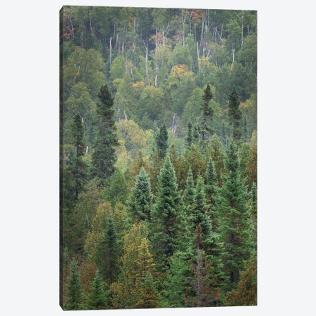 Superior National Forest IV Canvas Print #MJC51} by Alan Majchrowicz Canvas Wall Art