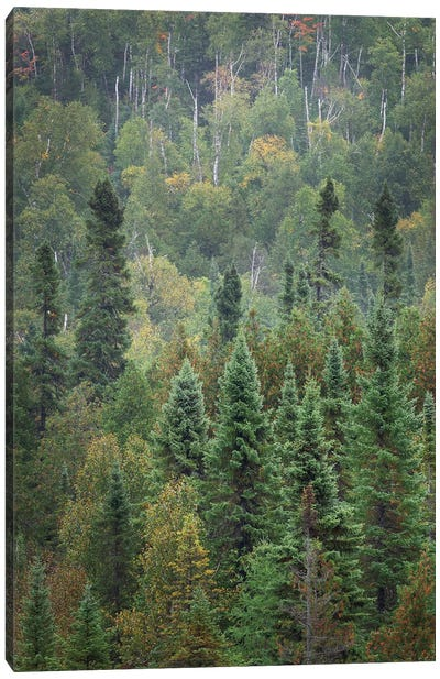 Superior National Forest IV Canvas Art Print