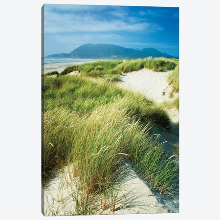 Oregon Dunes Grass Canvas Print #MJC56} by Alan Majchrowicz Canvas Print