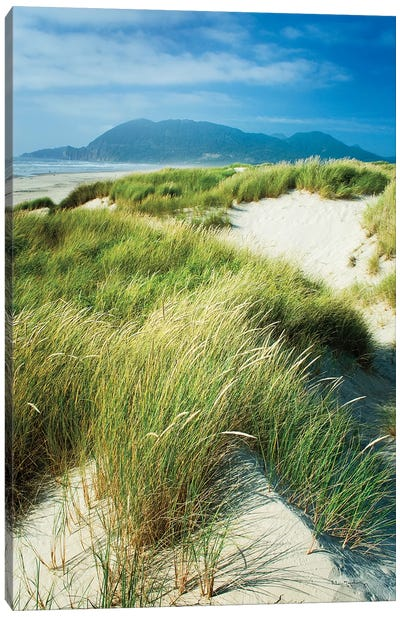 Oregon Dunes Grass Canvas Art Print