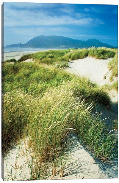 Oregon Dunes Grass Canvas Art Print