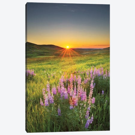 Prairie Sunrise Canvas Print #MJC57} by Alan Majchrowicz Canvas Art Print