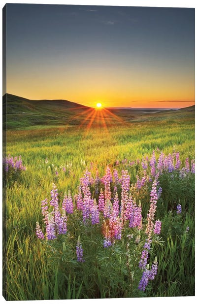 Prairie Sunrise Canvas Art Print