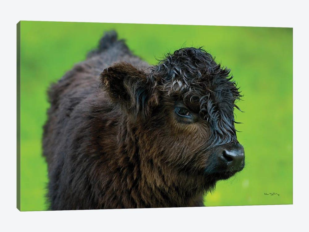 Scottish Highland Cattle XI by Alan Majchrowicz 1-piece Art Print