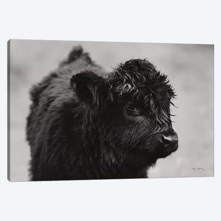 Scottish Highland Cattle XI In Black & White Canvas Print #MJC64} by Alan Majchrowicz Canvas Art